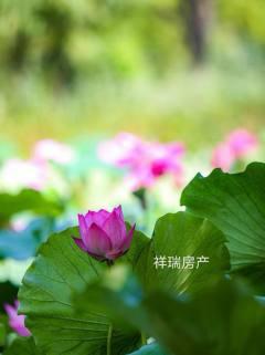 (赵家坝)汇丰铭城附近,紧挨着先锋小学,拎包入住